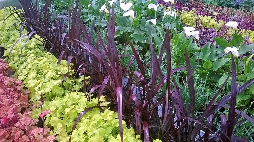 Végétaux d'extérieur