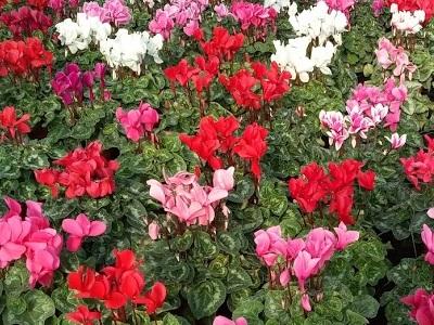 Nos productions de plants de fleurs